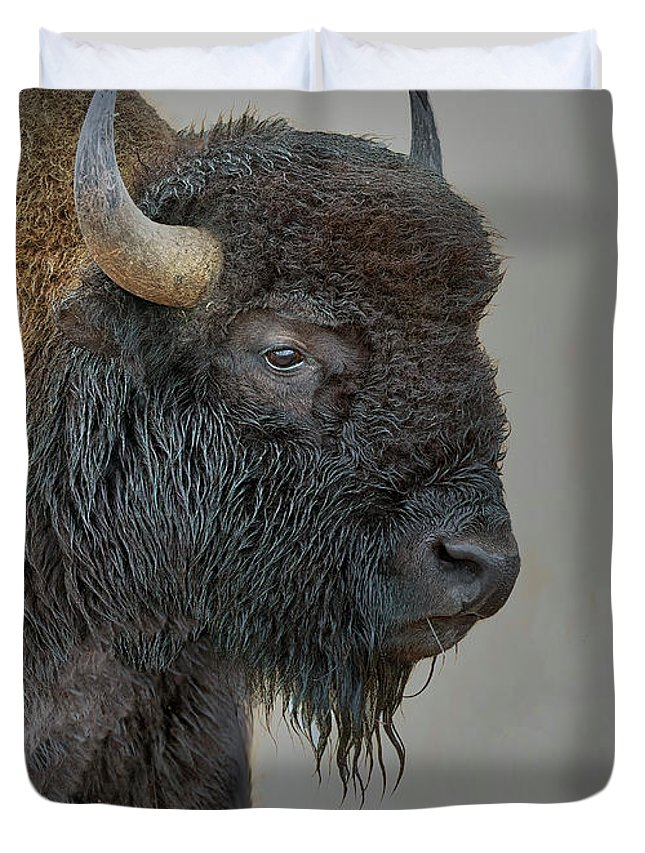 Bison Duvet Cover featuring the photograph Bison by Gary Langley