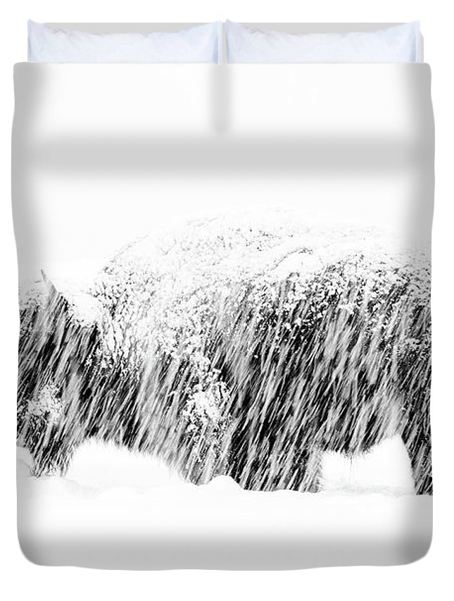 American Bison Duvet Cover featuring the photograph Bison In Painted Snow by Max Waugh