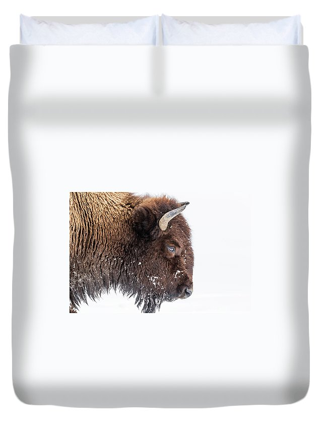 Vertebrate Duvet Cover featuring the photograph Bison In Winter by Kencanning