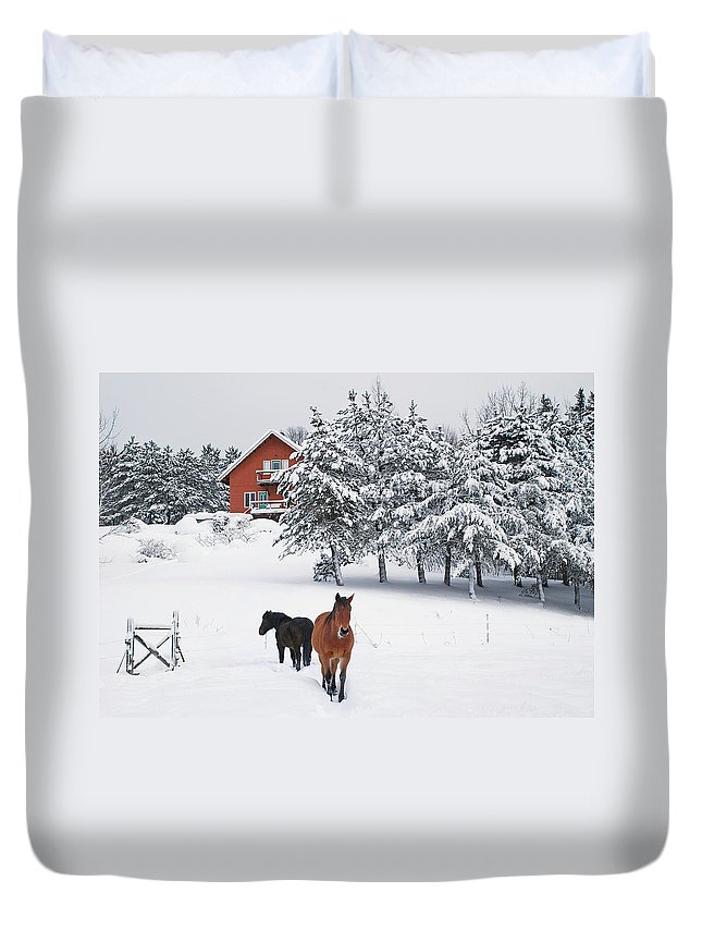 Horse Duvet Cover featuring the photograph Black And Brown Horse by Anne Louise Macdonald Of Hug A Horse Farm
