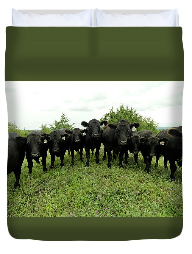 Grass Duvet Cover featuring the photograph Black Angus Cows by Xpacifica