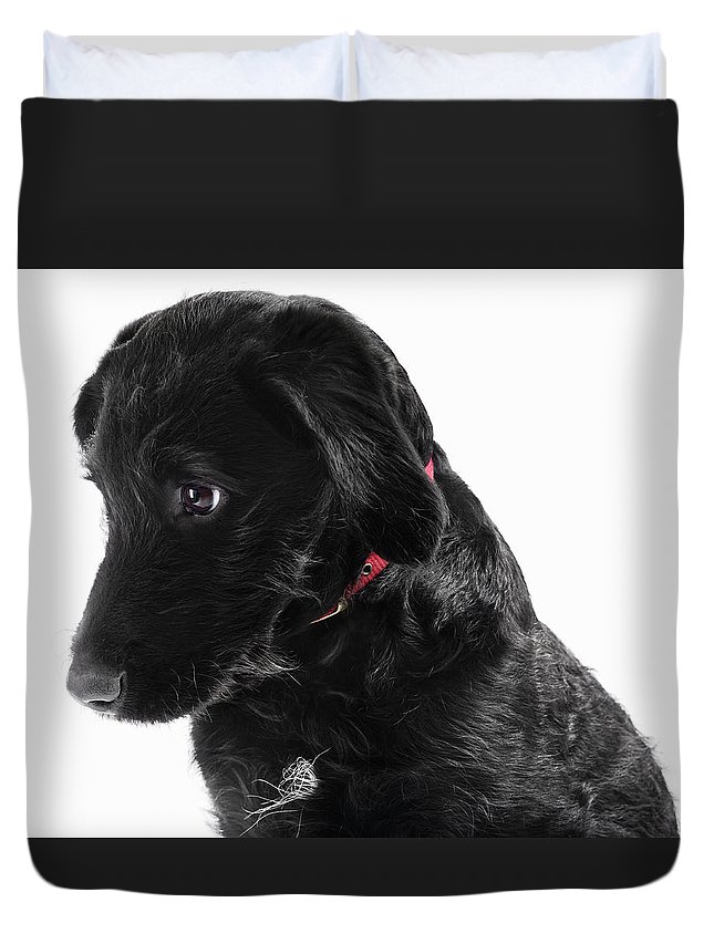 Pets Duvet Cover featuring the photograph Black Labradoodle by Gandee Vasan