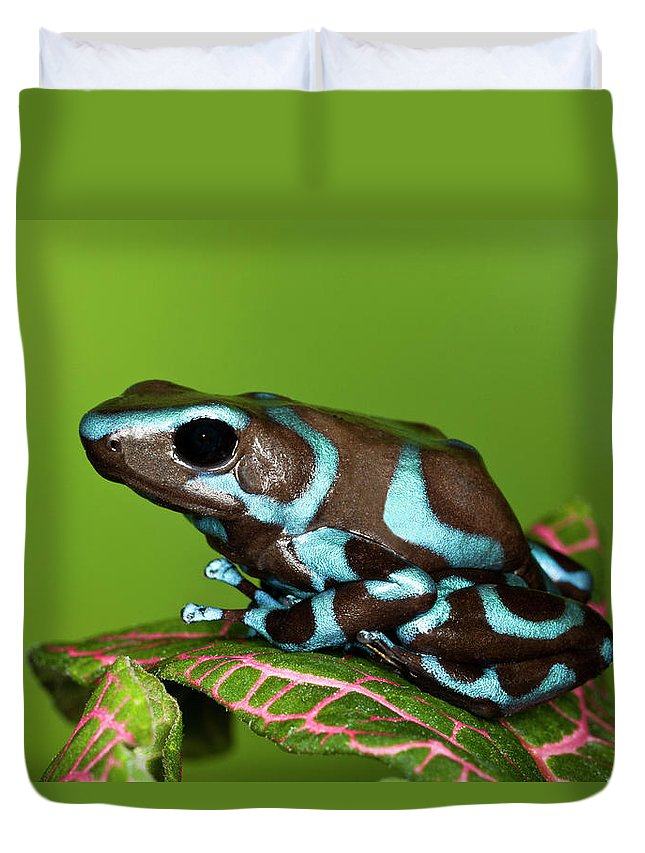 Animal Themes Duvet Cover featuring the photograph Blue And Black Dart Frog, Dendrobates by Adam Jones