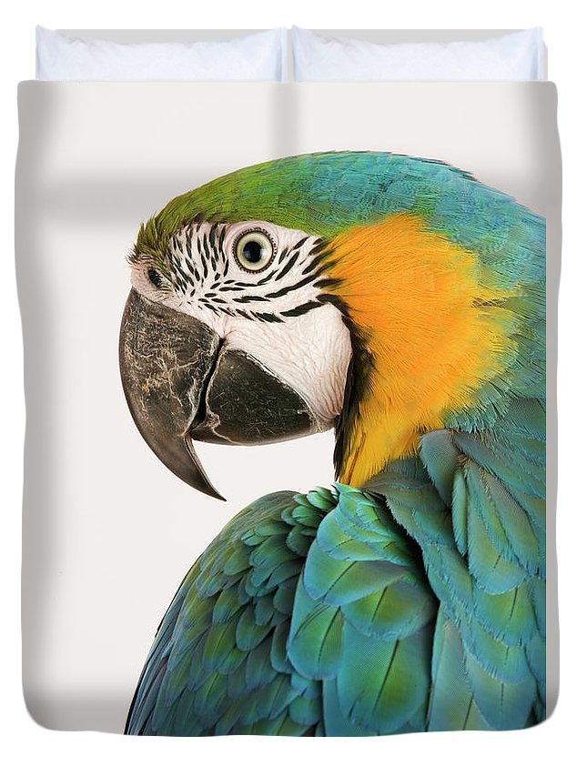 Macaw Duvet Cover featuring the photograph Blue And Gold Macaw Ara Ararauna by Martin Harvey
