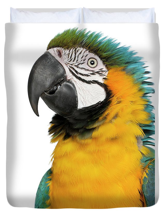 Macaw Duvet Cover featuring the photograph Blue And Yellow Macaw, Ara Ararauna by Life On White