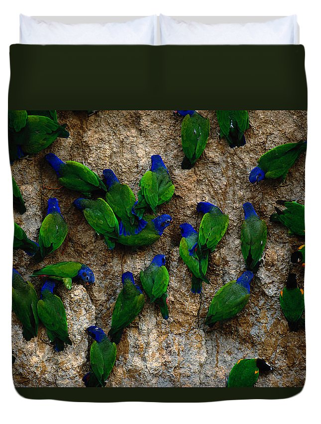 Blue Headed Parrot Duvet Cover featuring the photograph Blue-headed And Barrabands Parrots by Art Wolfe