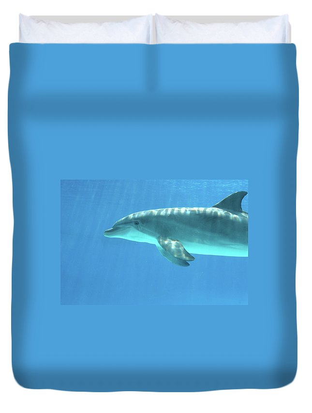 Underwater Duvet Cover featuring the photograph Bottlenose Dolphin by Anzeletti