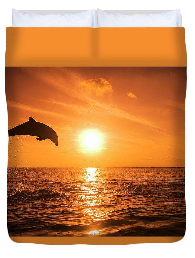 Orange Color Duvet Cover featuring the photograph Bottlenose Dolphin Tursiops Truncatus by Rene Frederick