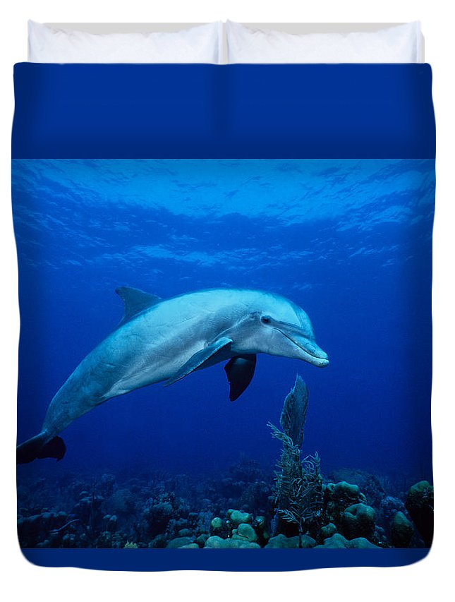 Underwater Duvet Cover featuring the photograph Bottlenose Dolphin,tursiops by Gerard Soury