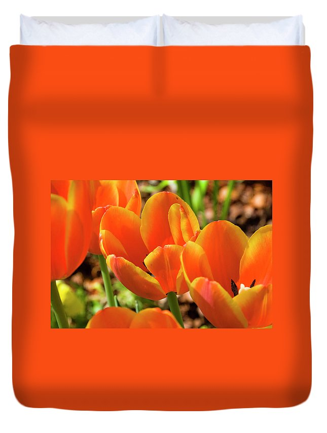 Flowerbed Duvet Cover featuring the photograph Bright Orange Tulips by Earleliason