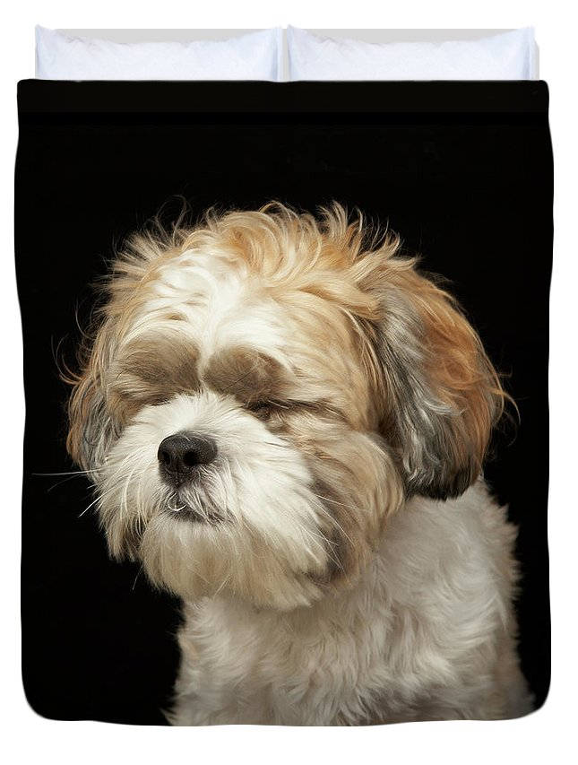Pets Duvet Cover featuring the photograph Brown And White Shih Tzu With Eyes by M Photo