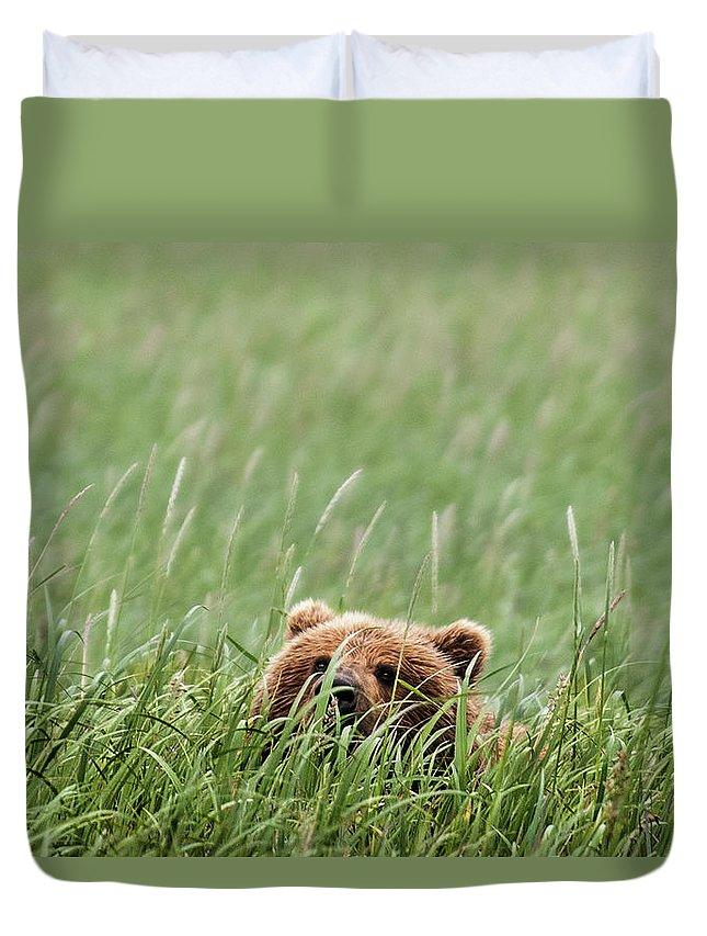 Katmai Peninsula Duvet Cover featuring the photograph Brown Bear by Trevor Johnston / Eye Meets World Photography