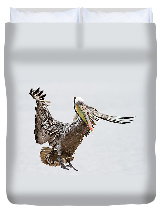 Oakland Duvet Cover featuring the photograph Brown Pelican by By Davor Desancic