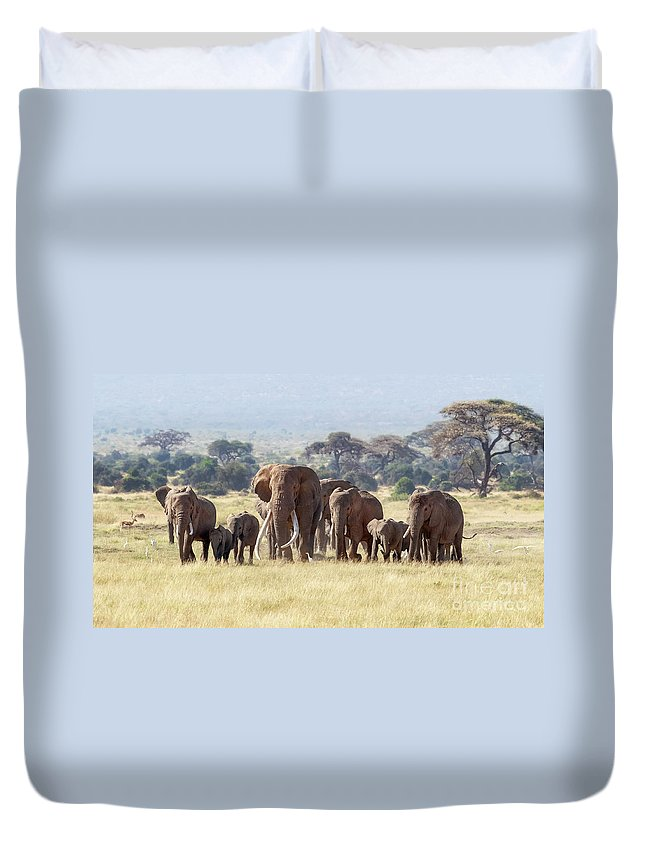 Elephant Duvet Cover featuring the photograph Bull Elephant With A Herd Of Females And Babies In Amboseli, Kenya by Jane Rix