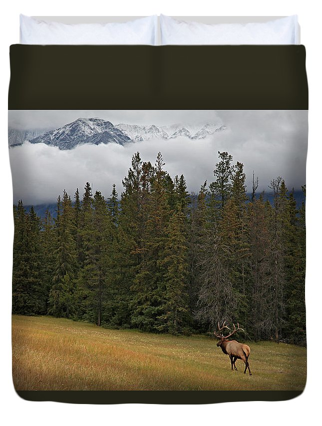 Snow Duvet Cover featuring the photograph Bull Elk In Meadow With Snow Covered by Guy Crittenden