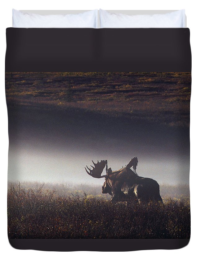 Majestic Duvet Cover featuring the photograph Bull Moose Alces Alces Walking Through by Johnny Johnson