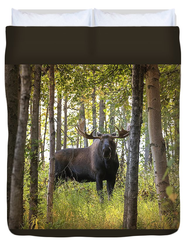 Alaska Duvet Cover featuring the photograph Bull Moose In Fall Forest by Scott Slone