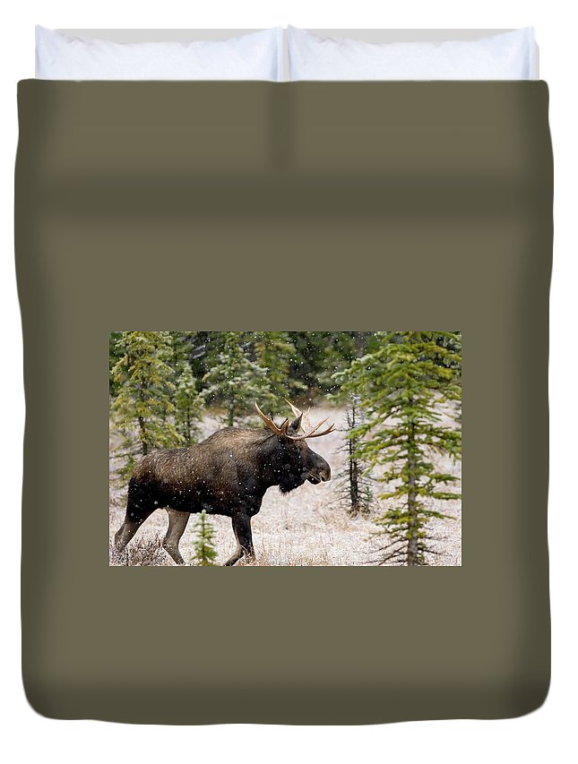 Horned Duvet Cover featuring the photograph Bull Moose In Snow Fall by Tulissidesign