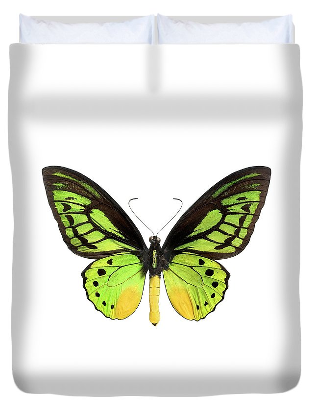 White Background Duvet Cover featuring the photograph Butterfly Lepidoptera With Green, Black by Flamingpumpkin