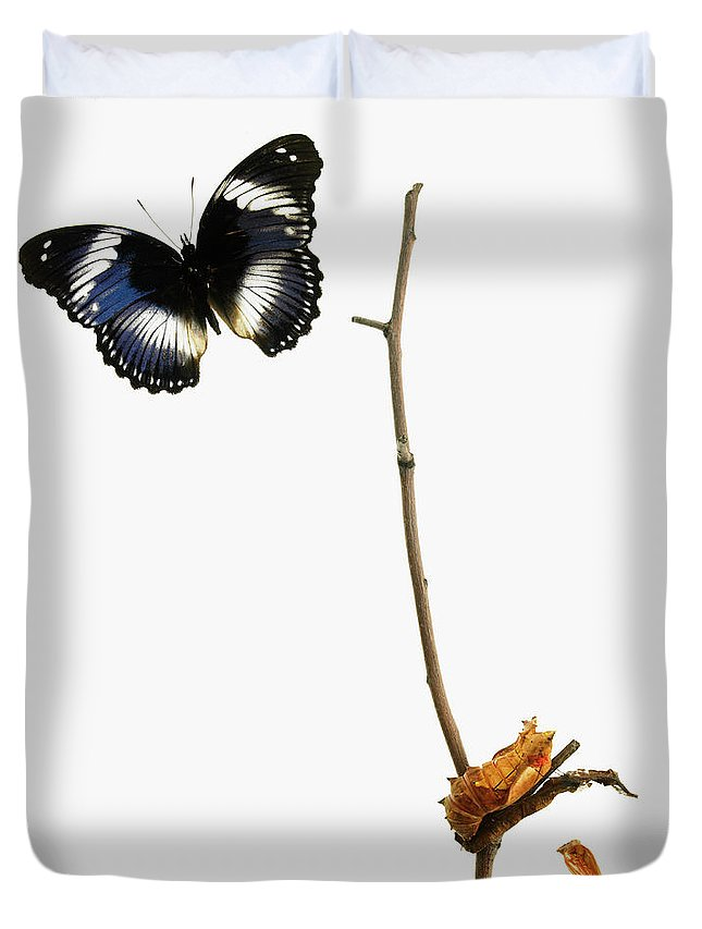 White Background Duvet Cover featuring the photograph Butterfly Transformation by David Arky
