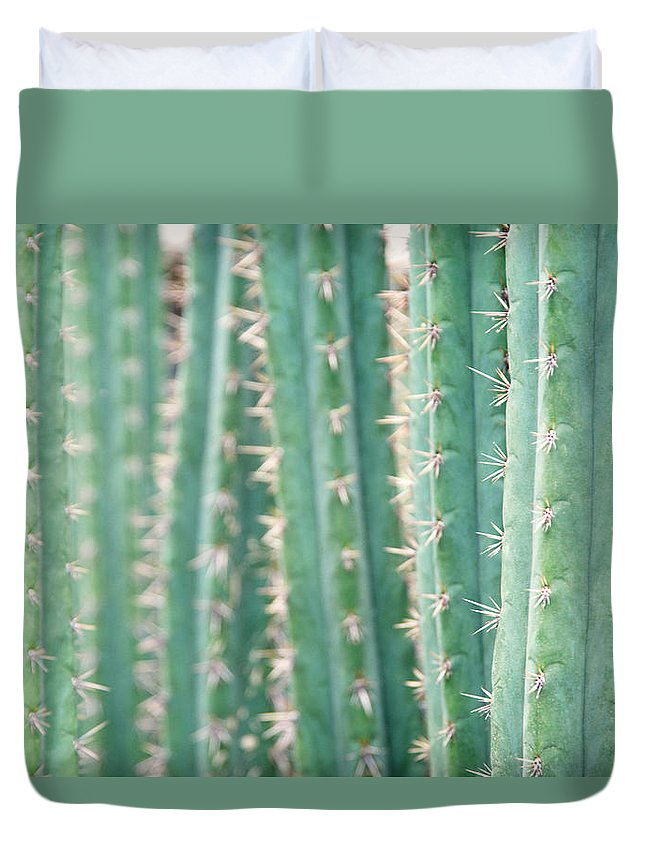 In A Row Duvet Cover featuring the photograph Cacti Echinopsis Pachanoi by Liz Whitaker