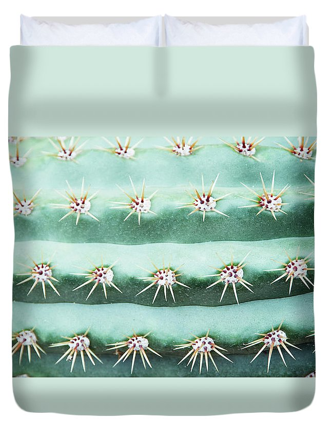 In A Row Duvet Cover featuring the photograph Cactus Echinopsis Candicans, Close-up by Liz Whitaker
