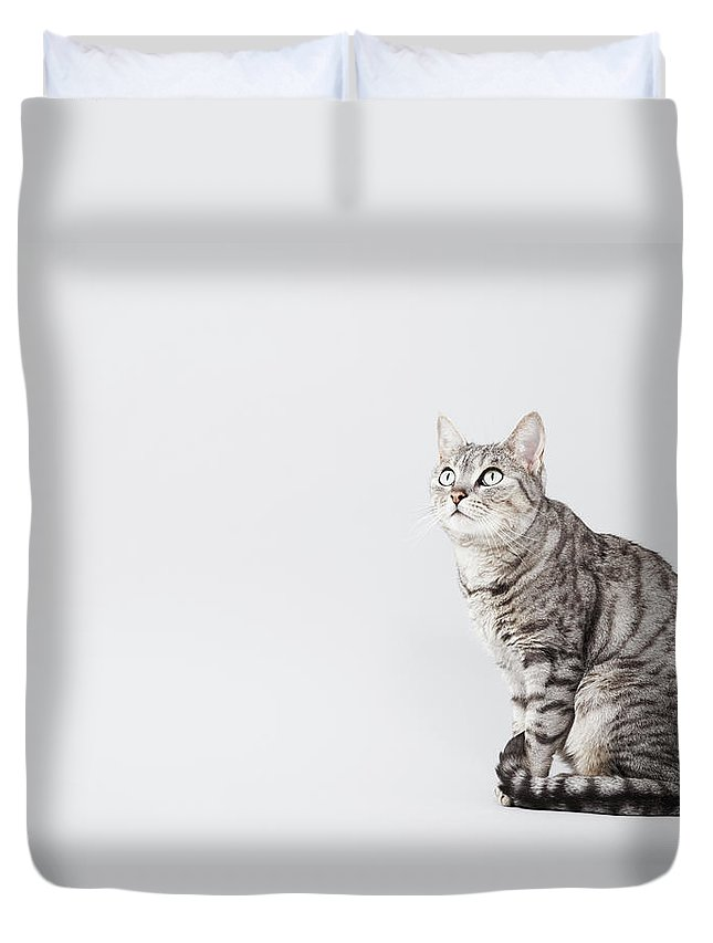 Pets Duvet Cover featuring the photograph Cat Looking Up by Lisa Stirling