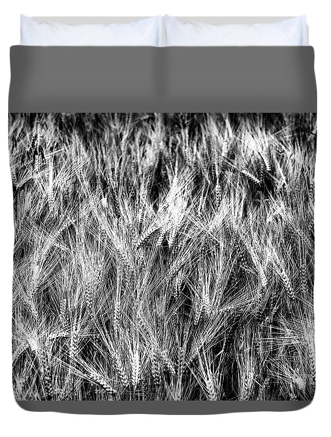 Nature Duvet Cover featuring the photograph Cereal Spikes. B And W by Vicente Sargues