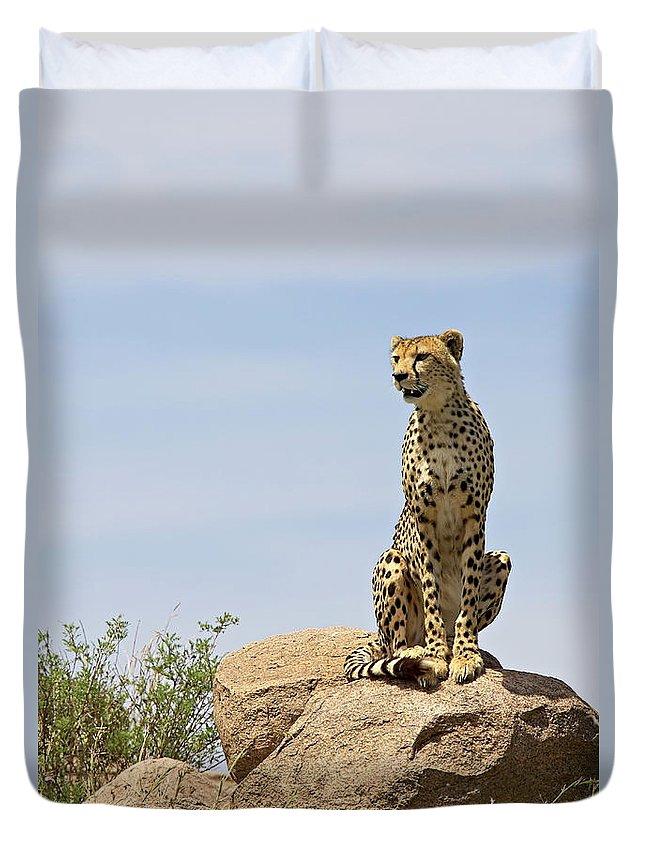 Tanzania Duvet Cover featuring the photograph Cheetah Acinonyx Jubatus Sitting On A by James Hager / Robertharding