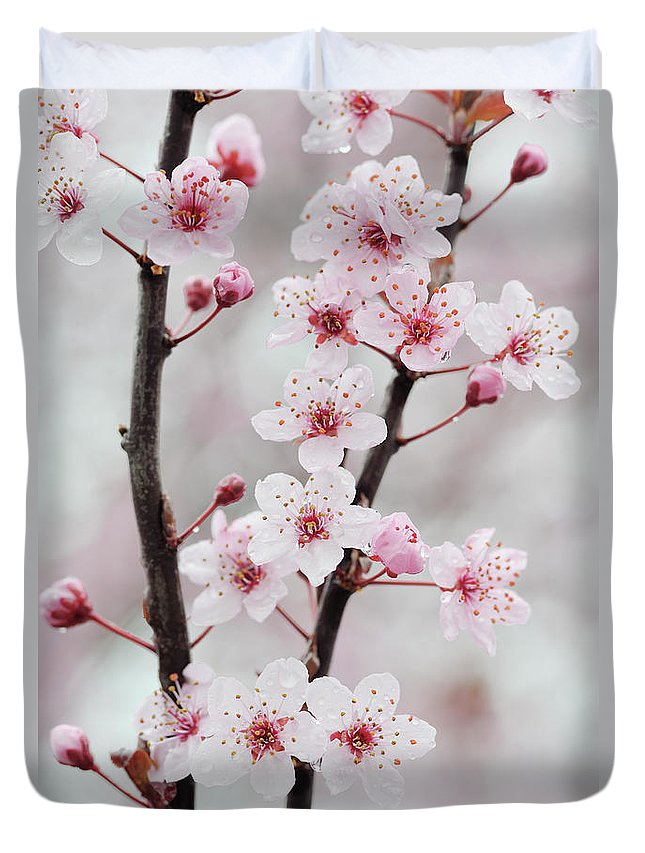 Cherry Duvet Cover featuring the photograph Cherry Plum Purple Plum Pink Flowers On by Martin Ruegner