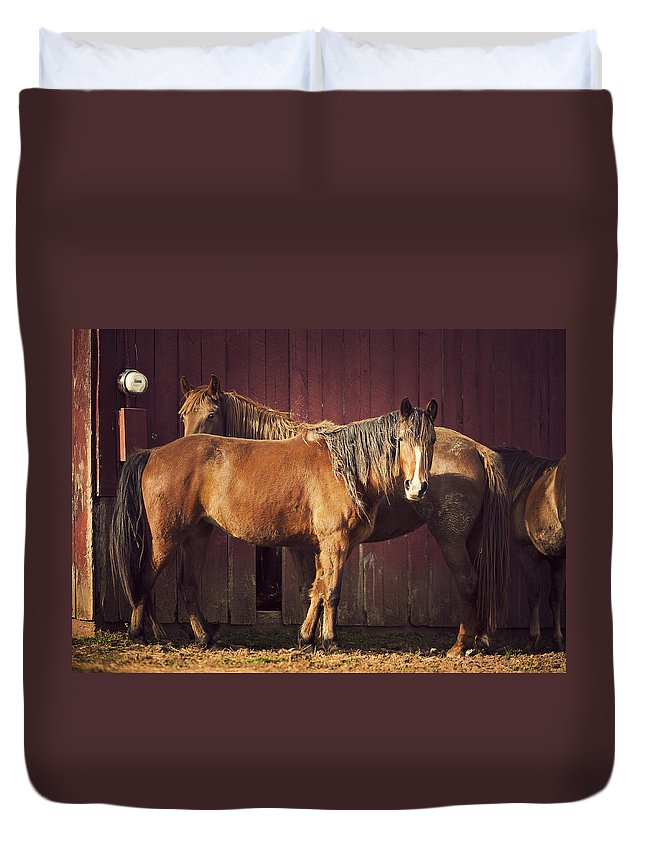 Horse Duvet Cover featuring the photograph Chestnut Horses by Thepalmer