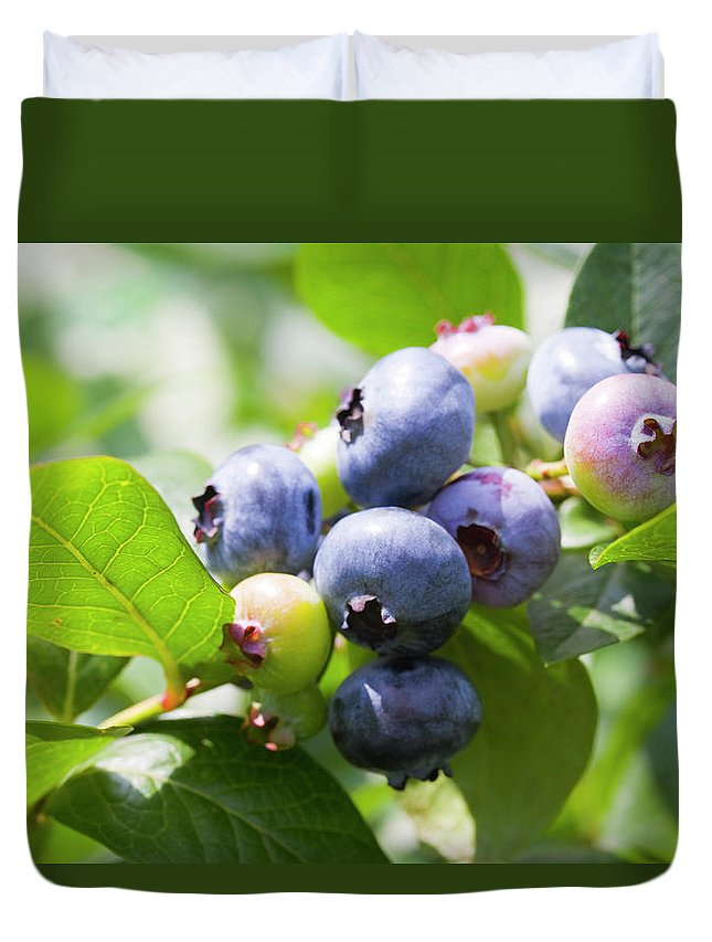 Yamanashi Prefecture Duvet Cover featuring the photograph Close-up Of Blueberry Plant And Berries by Daisuke Morita