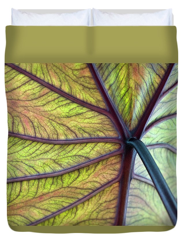 Voodoo Doll Duvet Cover featuring the photograph Close Up Of Colocasia Esculenta Leaf by Deb Casso