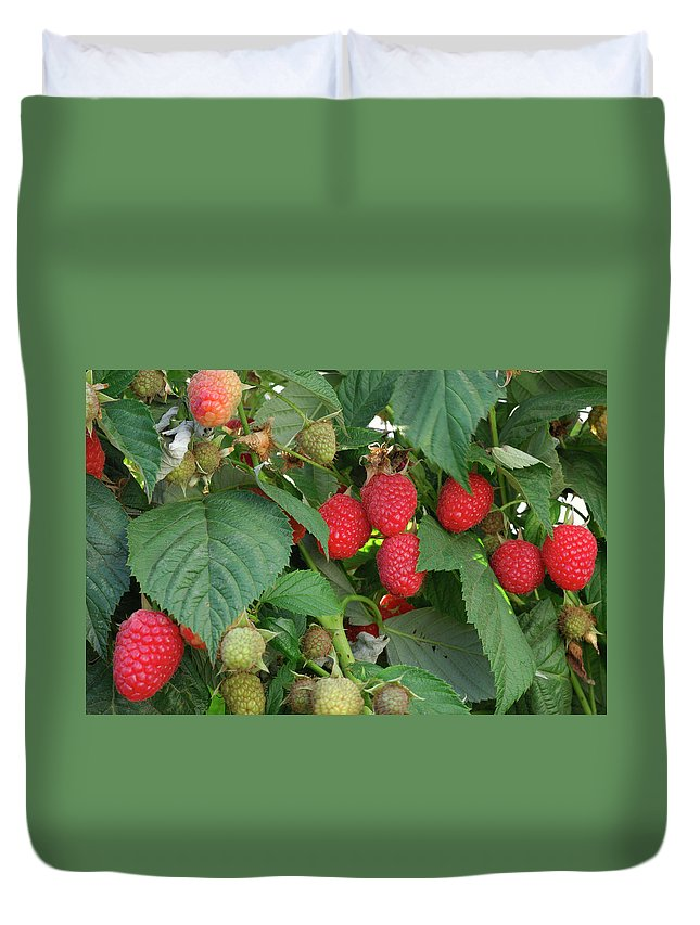 Non-urban Scene Duvet Cover featuring the photograph Close-up Ripening Organic Raspberries by Gomezdavid