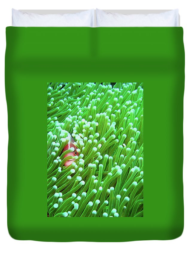 Underwater Duvet Cover featuring the photograph Clown Fish by Perry L Aragon