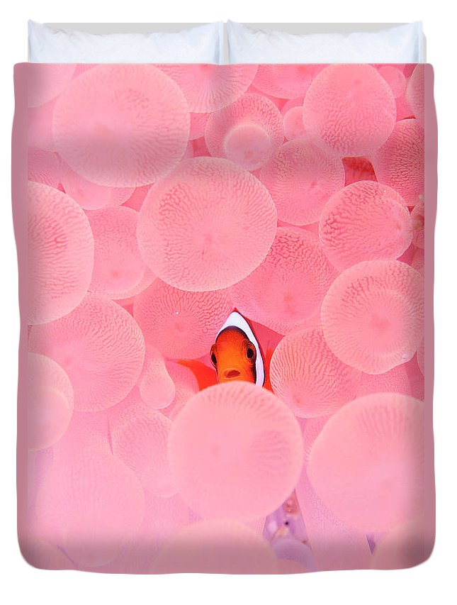 Underwater Duvet Cover featuring the photograph Clownfish In Corals by Yusuke Okada/a.collectionrf