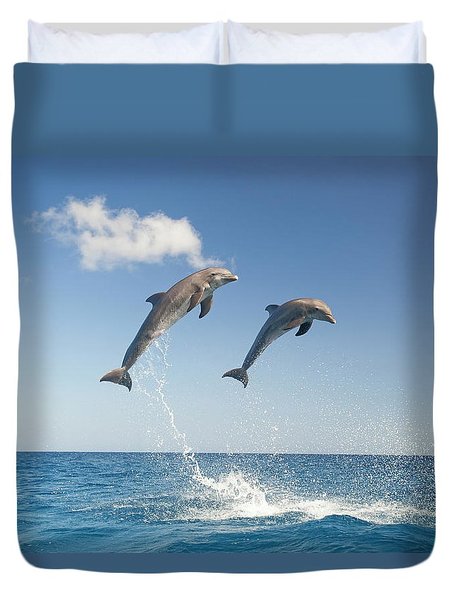 Aerodynamic Duvet Cover featuring the photograph Common Bottlenose Dolphins Tursiops by Mike Hill