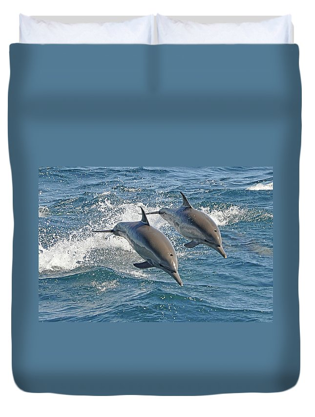 Diving Into Water Duvet Cover featuring the photograph Common Dolphins Leaping by Tim Melling