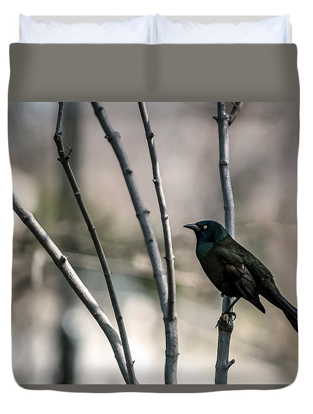 Animal Themes Duvet Cover featuring the photograph Common Grackle by By Ken Ilio