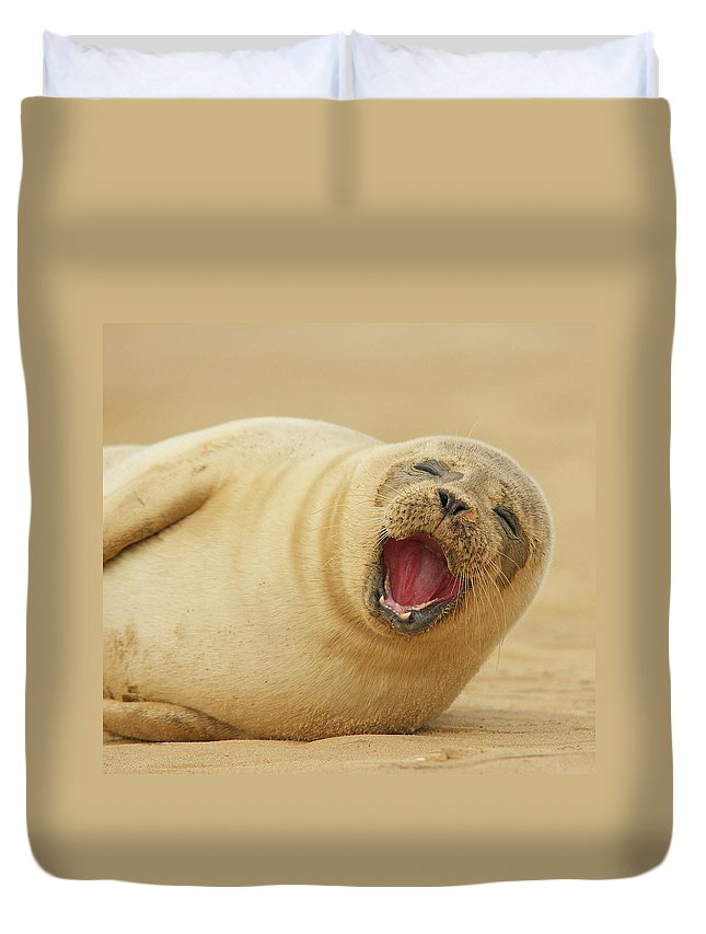 Animal Themes Duvet Cover featuring the photograph Common Seal by Copyright Alex Berryman