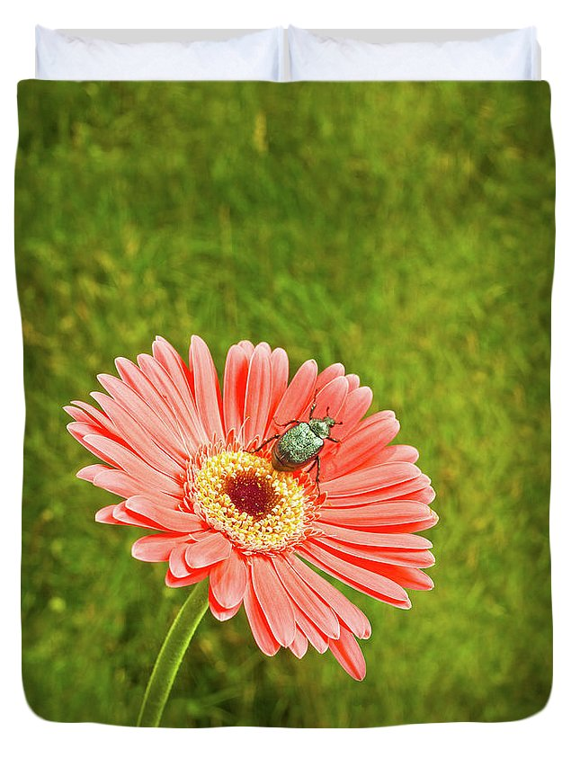 Tranquility Duvet Cover featuring the photograph Coral Gerbera Daisy With A June Bug by Chris Stein