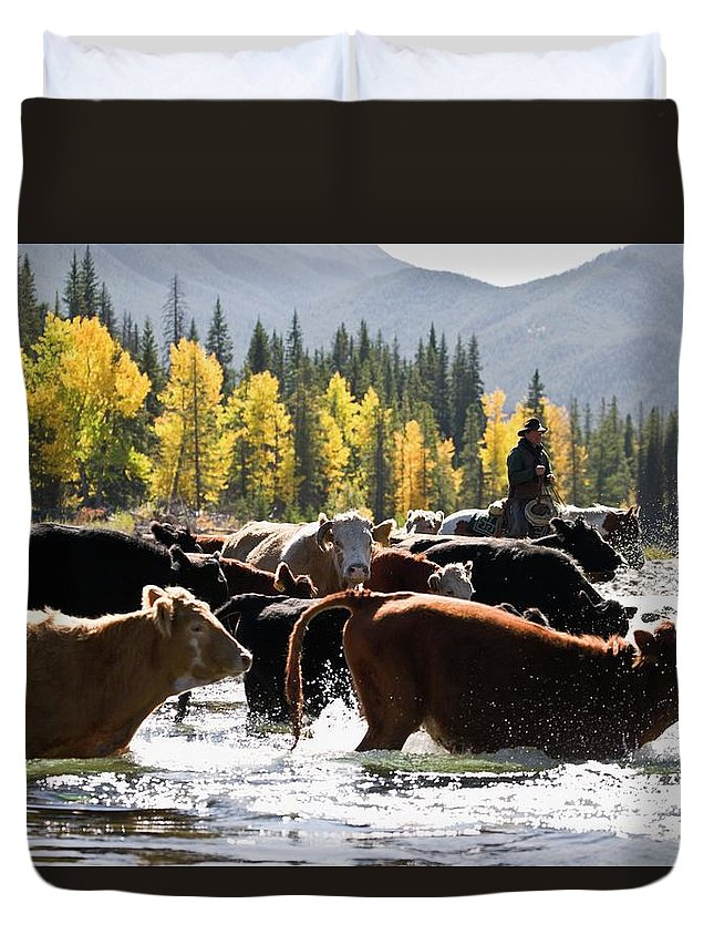 People Duvet Cover featuring the photograph Cowboy Herding Cattle Across River by Design Pics/carson Ganci