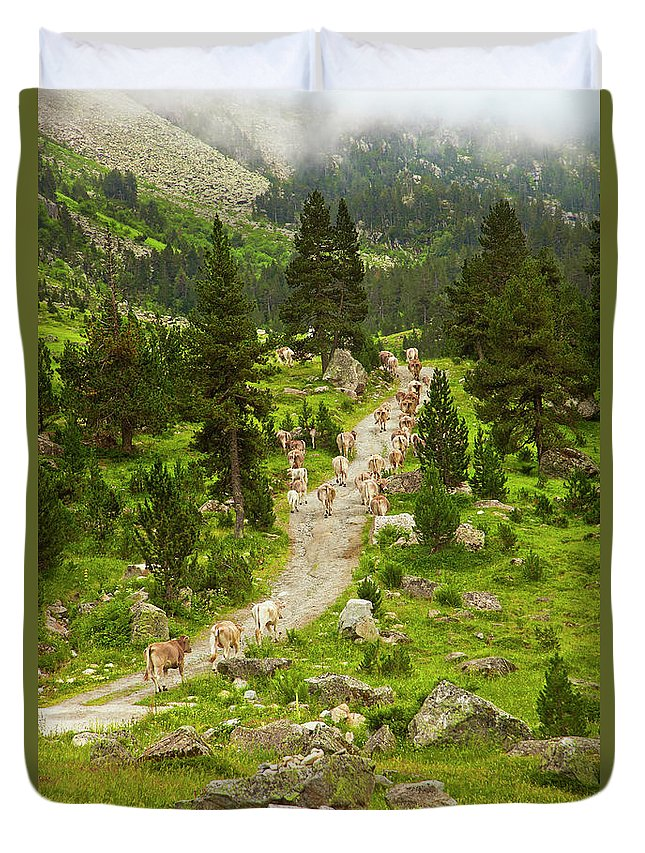 Catalonia Duvet Cover featuring the photograph Cows Walking In Catalan Pyrenees by Gonzalo Azumendi