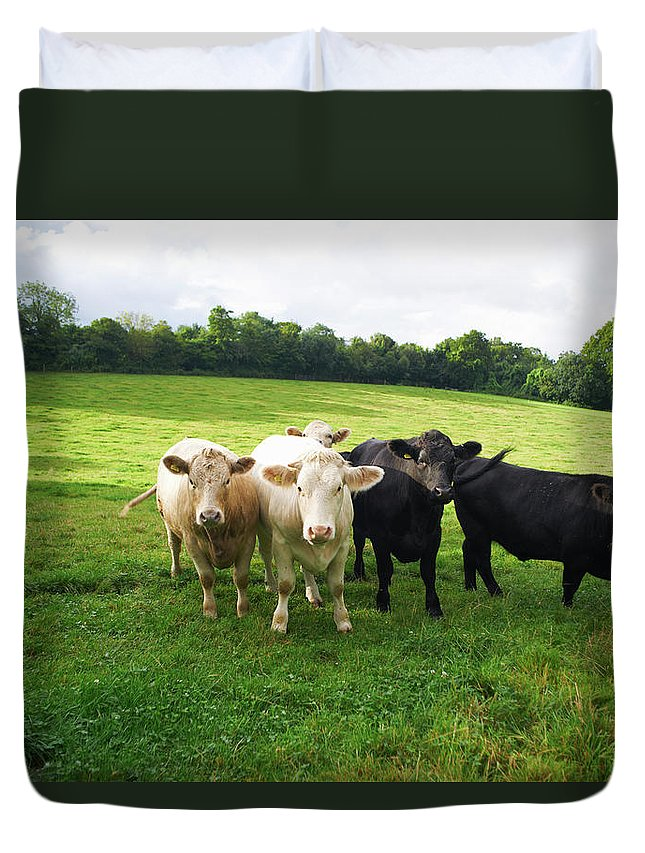 Grass Duvet Cover featuring the photograph Cows Walking In Grassy Field by Peter Muller