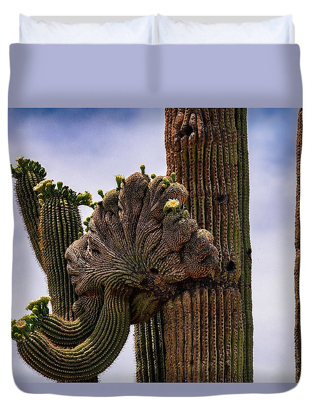 Crested Saguaro Duvet Cover featuring the photograph Crested by Saija Lehtonen