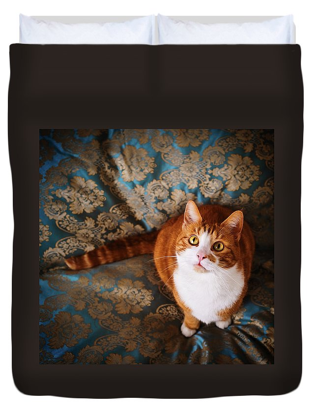 Pets Duvet Cover featuring the photograph Cute Cat Named Nisse by Knape