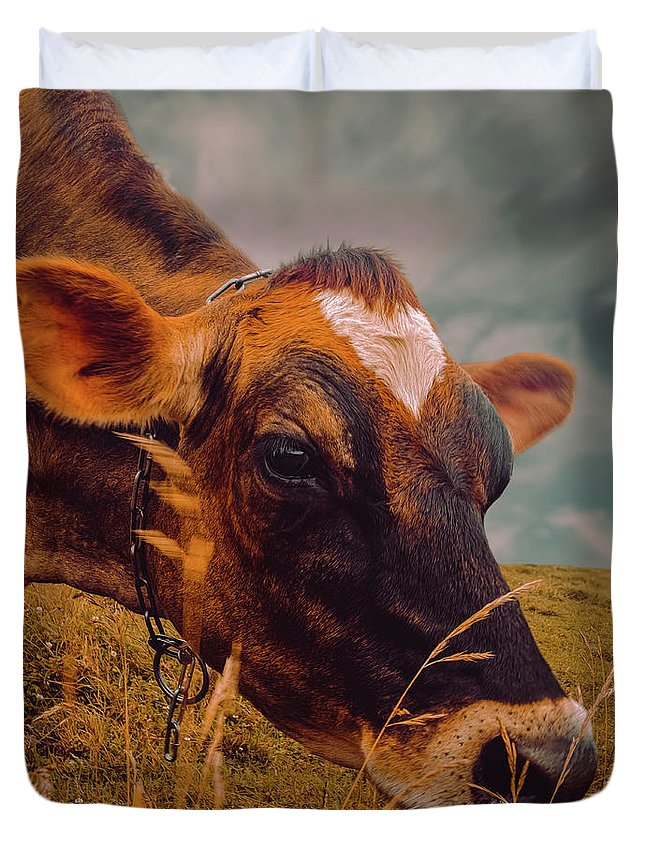 Cow Duvet Cover featuring the photograph Dairy Cow Eating Grass by Bob Orsillo