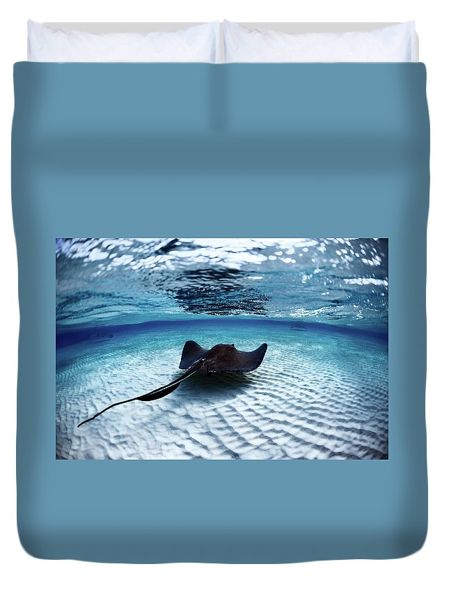 Underwater Duvet Cover featuring the photograph Deadly Stingray by Extreme-photographer
