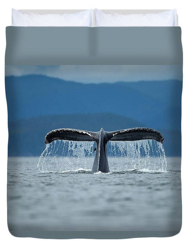 Diving Into Water Duvet Cover featuring the photograph Diving Humpback Whale, Alaska by Paul Souders