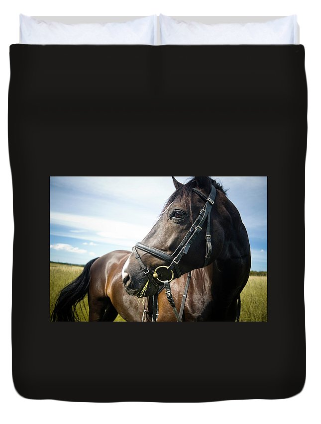Horse Duvet Cover featuring the photograph Dont Look Back by Pixalot